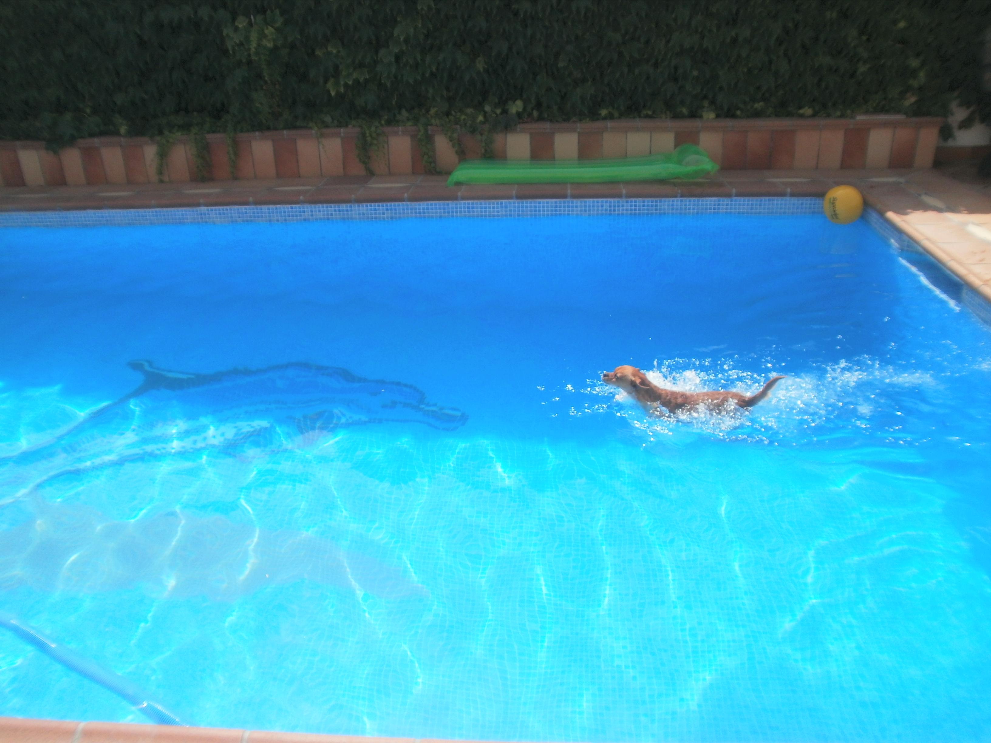 Si ten is perro cuidado con las piscinas for Piscina perros