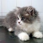 ¿Cómo saber si un gato está enfermo?