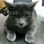 Mi gato tiene una enfermedad renal crónica.