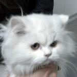 Mi gato se ha intoxicado.