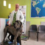 ¿Qué champú uso en mi perro con caspa o piel grasa?