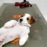 ¿Cómo hago vomitar a mi perro?